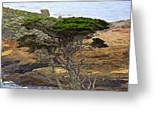 Cypress Tree In Point Lobos State Reserve Near Monterey-california  Greeting Card