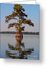 Cypress Tree On Reelfoot Lake Greeting Card