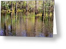 Cypress Trees Along The Hillsborough River Greeting Card