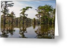 Cypress Trees And Spanish Moss In Lake Martin Greeting Card