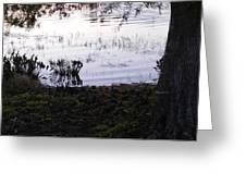 Cypress Trees And Water2 Greeting Card