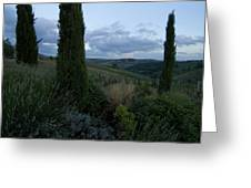 Cypress Trees Growing In The Rolling Greeting Card by Todd Gipstein