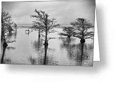 Cypress Trees In Lake Mattamuskeet North Carolina Greeting Card