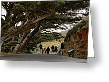 Cypress Tunnel Greeting Card