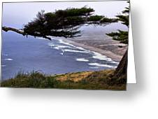 Cypress View Greeting Card