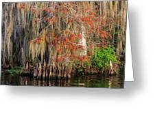 Cypress Winter Colors Greeting Card