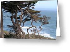 Cypress On The Cliff 15 Greeting Card