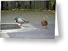 D-a0048 Mallard Ducks In Our Yard Greeting Card