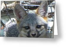 D-a0068 Gray Fox Pup Greeting Card