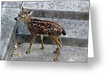 D-a0069 Mule Deer Fawn On Our Property On Sonoma Mountain Greeting Card