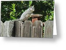 D-a0071-e-dc Gray Squirrel On Our Fence Greeting Card