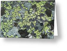 D07343-dc Lichen On Rock Greeting Card