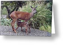 D2b6314 Fawn And Deer Mom Greeting Card