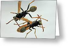 D2b6337 Wasps On Sonoma Mountain Greeting Card