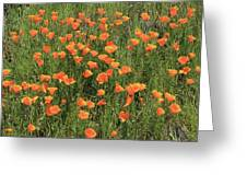 d7b6307 California Poppies Greeting Card