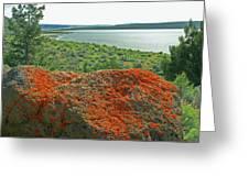 Da5869 Lichen Covered Rock Greeting Card