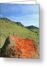 Da5872 Lichen Covered Rock Below Abert Rim Greeting Card