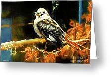 Kookaburra Kingfisher Dacelo-novaeguineae Greeting Card