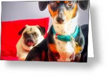 Dachshund Dog, Pug Dog, Good Time On Bed Greeting Card