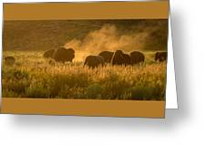 Daddy Bull And The Rut Greeting Card