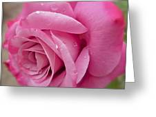 Daddy's Rose Greeting Card