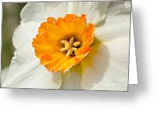 Daffodil Narcissus Flower Greeting Card