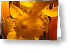 Daffodiil Flowers Evening Glow 9 Contemporary Modern Art Print Giclee Greeting Card