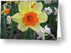Daffodil 0796 Greeting Card
