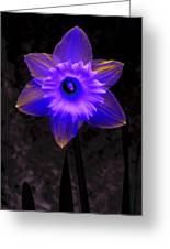 Daffodil 4 Greeting Card