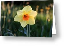 Daffodil At Sunset Greeting Card