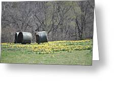 Daffodil Bales Greeting Card