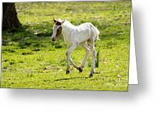 Romping Through The Field Greeting Card