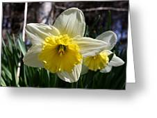 Daffodil Days Greeting Card