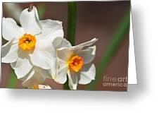 Daffodil Dazzle Greeting Card