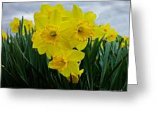 Daffodil Delight Greeting Card