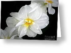 Daffodil Diagonal Greeting Card