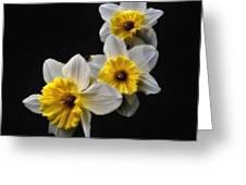 Daffodil Dream Greeting Card