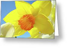 Daffodil Flowers Artwork 18 Spring Daffodils Art Prints Floral Artwork Greeting Card