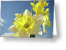 Daffodil Flowers Artwork Floral Photography Spring Flower Art Prints Greeting Card