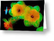 Daffodil Glow Greeting Card