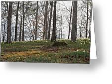 Daffodil Hill Greeting Card