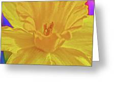 Daffodil In Spring Greeting Card