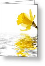 Daffodil Reflected Greeting Card