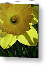 Daffodil Sun Greeting Card