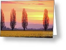 Daffodil Sunrise Greeting Card