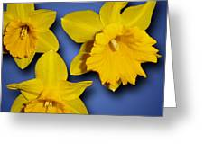 Daffodil Trio Greeting Card