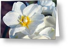 Daffodil Up Close Greeting Card