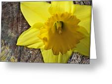 Daffodil Wood Composite Greeting Card
