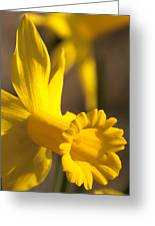 Daffodil Yellow Greeting Card