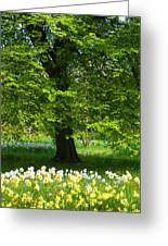 Daffodils And Narcissus Under Tree Greeting Card